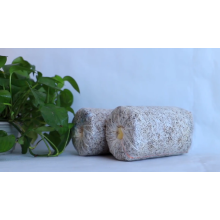 Bolsas de hongos ostra congelados / Substrate GAP