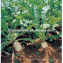 MR02 Gaoshuai высокого качества китайская компания семена редиски