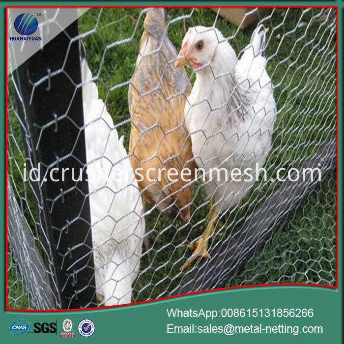 chick wire mesh offer