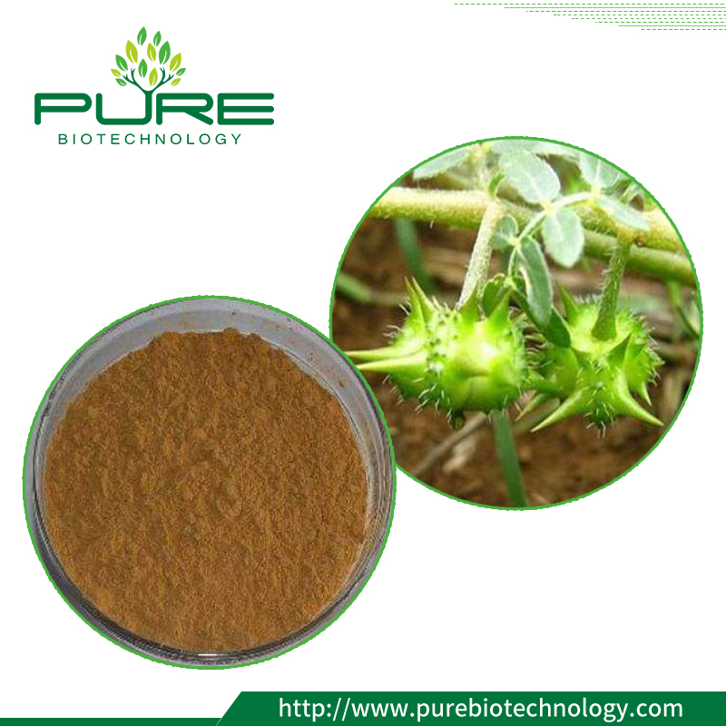 Natural Tribulus Terrestris Extract