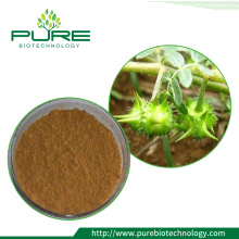 Natural Tribulus Terrestris สารสกัด Saponins 10% 40% 60% 90%