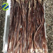 lula gigante tentáculo congelado de tamanho longo órgão sexual gigas lula
