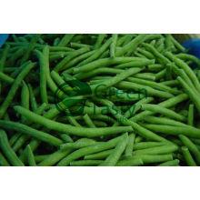 Vegetais enlatados de feijões verdes franceses (MIC)