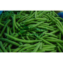 Canned Vegetables of French Green Beans (MIC)