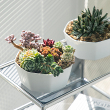 Wholesale black irregular plastic nursery seeding plastic flower pots , cheap indoor plant pots