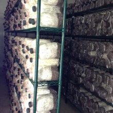Metal Mushroom Growing Storage Rack for Cold Room (CJ16018200A5E)