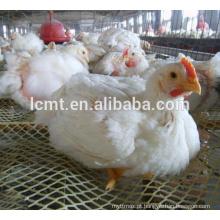 casa de galinhas, alimentando e bebendo frangos de capoeira sistema de elevação de solo