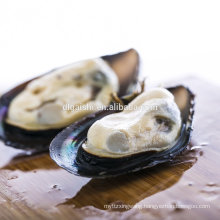 Frozen seafood mussel meat