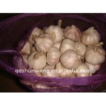 Jining shandong ail blanc
