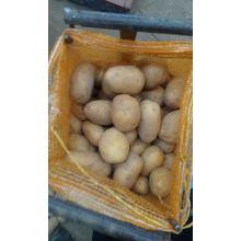 2016 Nouvelle culture de pommes de terre fraîches Shandong