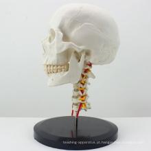 Crânio anatômico plástico de SKULL06 (12332) com modelo cervical da espinha