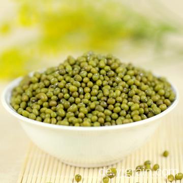 Grüne Mungbohnen für die Landwirtschaft mit niedrigerem Preis