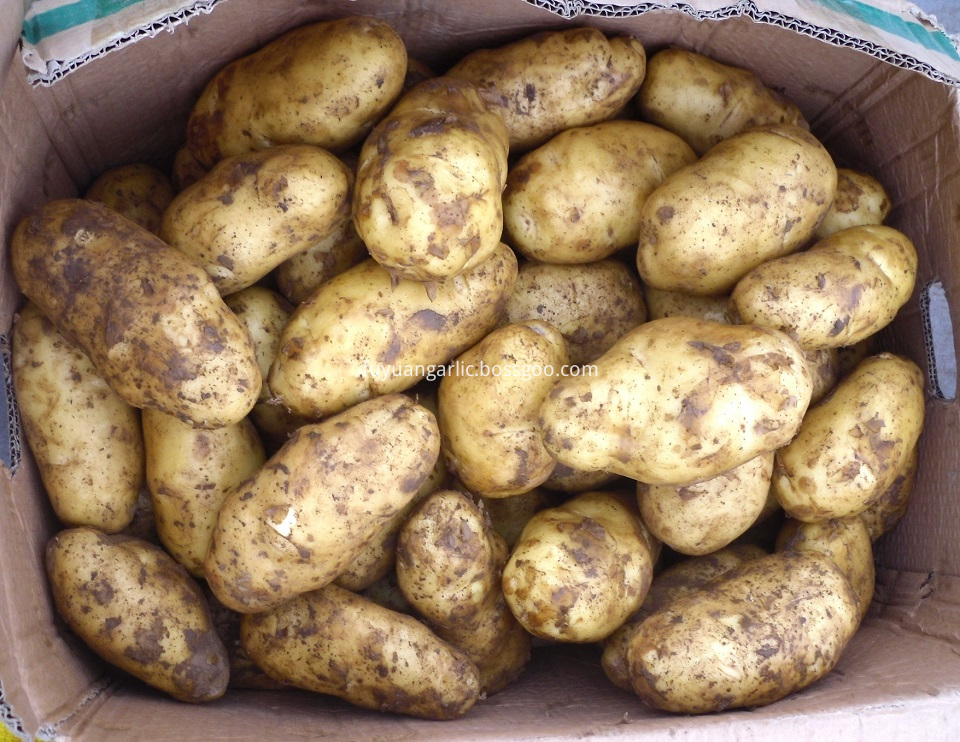 Potato Materials
