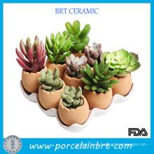 Adorable conjunto de huevos Design Garden Pot