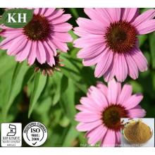 Pure Powdered Echinacea Purpurea Extract Cichoric Acid, Polyphenols, Polysaccharide