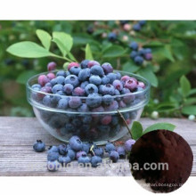High Quality 100% Natural Bilberry Extract 4:1 Anthocyanidin 25%
