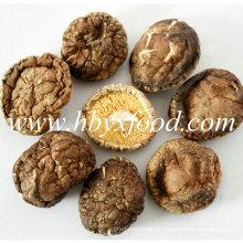 100% Natural Pollution-Free Dried 4-5cm Smooth Shiitake Mushroom