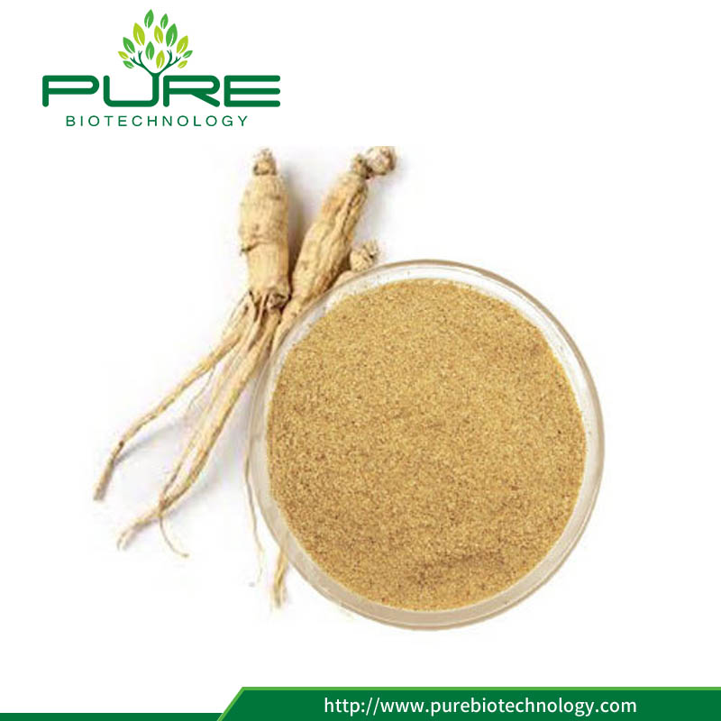 Ginseng extract 20% ginsenoside with Low price