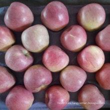 Calidad superior de la manzana Qinguan fresca