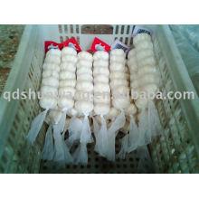 fresh jinxiang pure white garlic