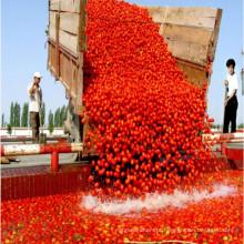 70g a 4500g de pasta de tomate vermelho