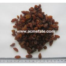 China suppliers best price red raisin