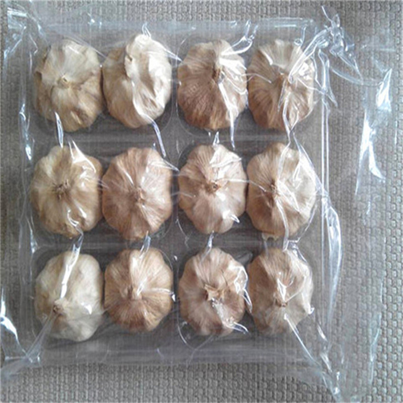 Multi Black Garlic 055