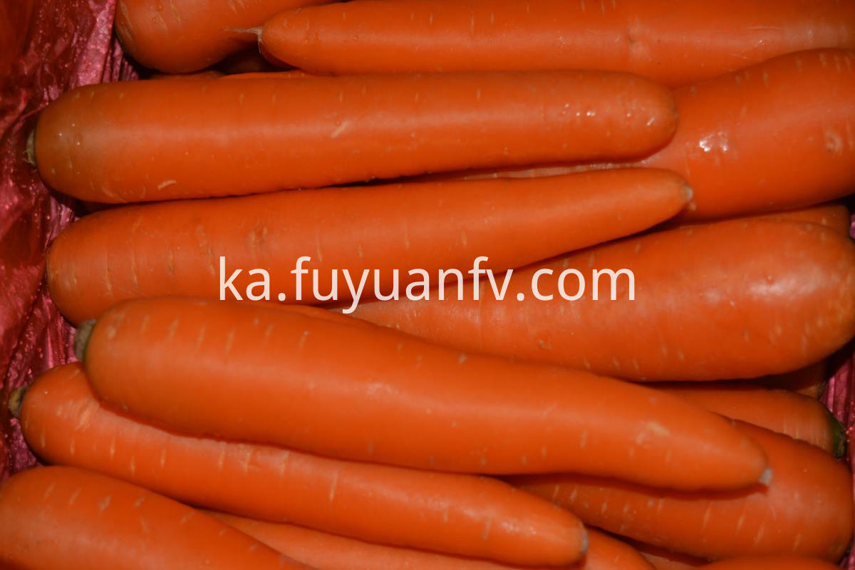 fresh farm carrot