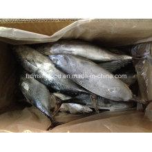 Pescado IQF Bonito (700g +)