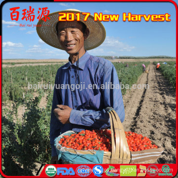 Hand selecting Ningxia wolfberry goji berry sweets dried fruits