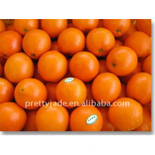 Mandarina de bebé