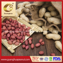 New Crop Raw Peanut in Shell Shandong