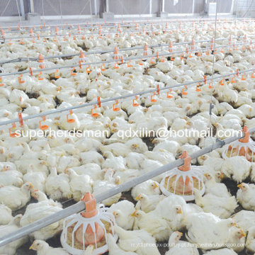 Aves da fazenda equipamentos para frangos de corte