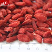 New harvest fruit goji berry wholeseller