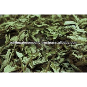 Mint leaves exporter