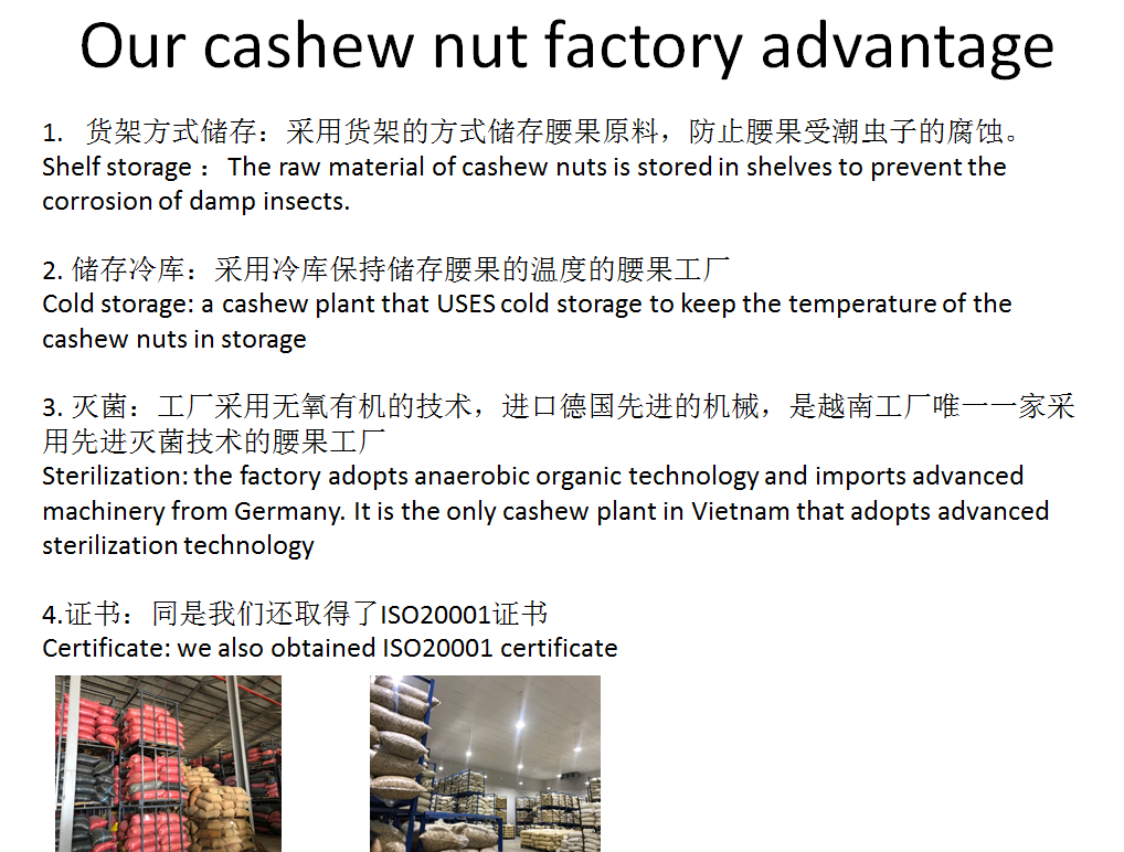 cashew nut advantage