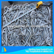 fish feed frozen sand lance supplier