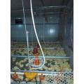 Bebedor de mamilo para aumento de frango