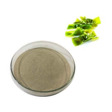 El mejor polvo de jugo de algas marinas para uso alimentario