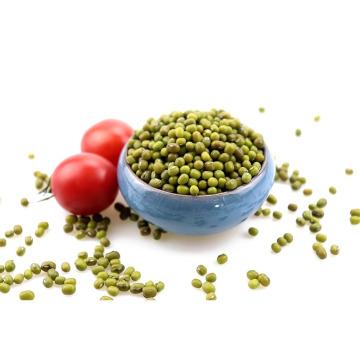 Haricot mungo vert (de première qualité séché), germination de haricot mungo, haricot mungo pour la germination