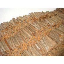 cassia stick
