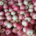 Caixa de 20 kg New Fresh Red Gala Apple