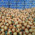 Chinois exportant le pomelo de miel frais standard