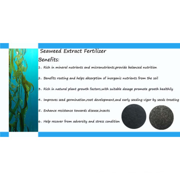 Seaweed Extract Powder Made in China