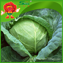 green cabbage for sale/fresh cabbage grade A ceramic cabbage