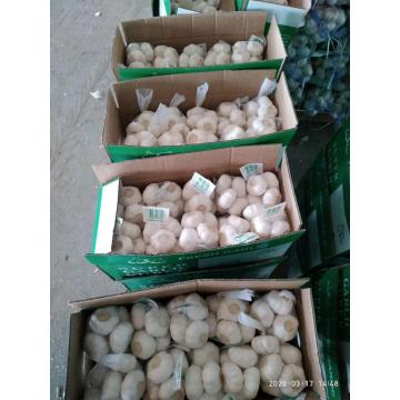 HIGH END FRESH GARLIC GARLIC ANPASSEN