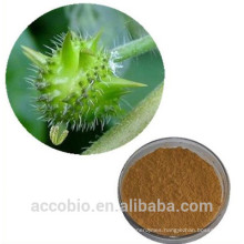 Best price Tribulus Terrestris Extract( Puncture Vine), Saponins 40% - 90%