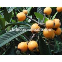 Competitive price Loquat leaf Extract Ursolic Acid