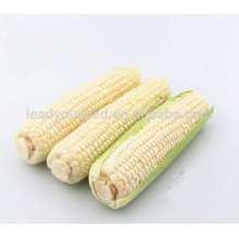 NCO05 Xihu guangzhou alta qualidade de rendimento sementes de milho híbrido