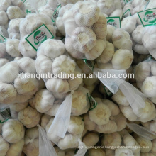 Fresh Chinese garlic from China garlic supplier